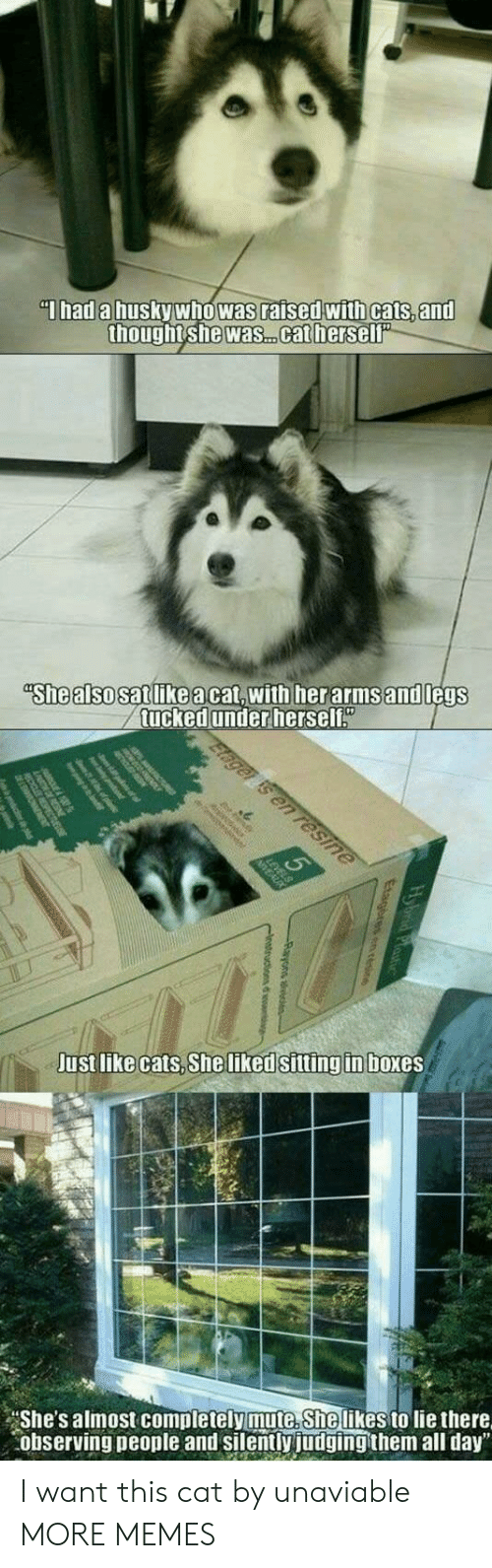 "Cats, Dank, and Memes: Thad a husky who was raised with cats, and  thought she was. .cat herself""  ""She also satlikeacat,with herarmsand legs  tucked under herself""  Elager is en resine  Just like cats, She liked sitting in boxes  She's almost completely mute. She likes to lie there  observing people and silently judging them all day"" I want this cat by unaviable MORE MEMES"