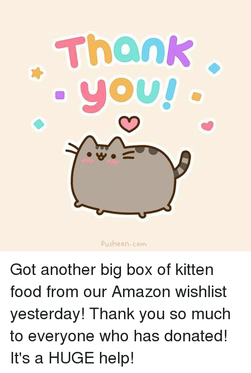 Amazon, Food, and Memes: Thank  yoU!  Pusheen com Got another big box of kitten food from our Amazon wishlist yesterday! Thank you so much to everyone who has donated! It's a HUGE help!