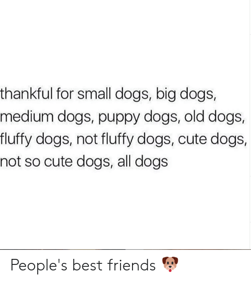 Cute, Dogs, and Friends: thankful for small dogs, big dogs,  medium dogs, puppy dogs, old dogs,  fluffy dogs, not fluffy dogs, cute dogs,  not so cute dogs, all dogs People's best friends 🐶