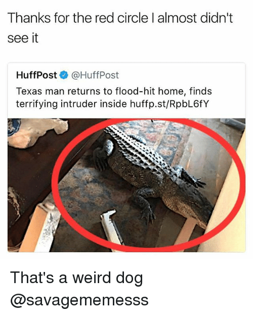 Memes, Weird, and Home: Thanks for the red circle l almost didnt  see it  HuffPost@HuffPost  Texas man returns to flood-hit home, finds  terrifying intruder inside huffp.st/RpbL6fY That's a weird dog @savagememesss