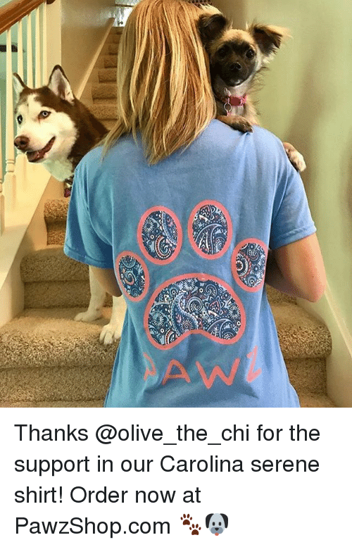 Memes, 🤖, and Com: Thanks @olive_the_chi for the support in our Carolina serene shirt! Order now at PawzShop.com 🐾🐶