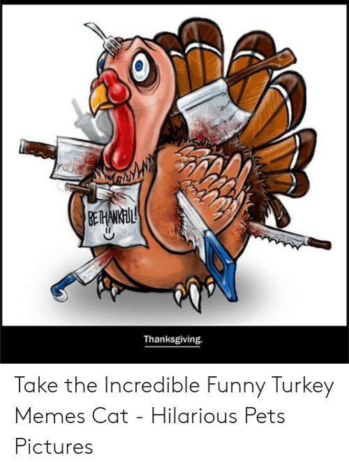 Happy Thanksgiving Yall Shell Bling >> Thanksgiving Take The Incredible Funny Turkey Memes Cat Hilarious