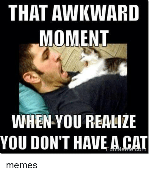 Memes, Awkward, and That Awkward Moment: THAT AWKWARD  MOMENT  WHEN YOU REALIZE  YOU DON'T HAVE A CAT memes