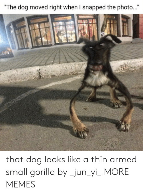 Dank, Memes, and Target: that dog looks like a thin armed small gorilla by _jun_yi_ MORE MEMES
