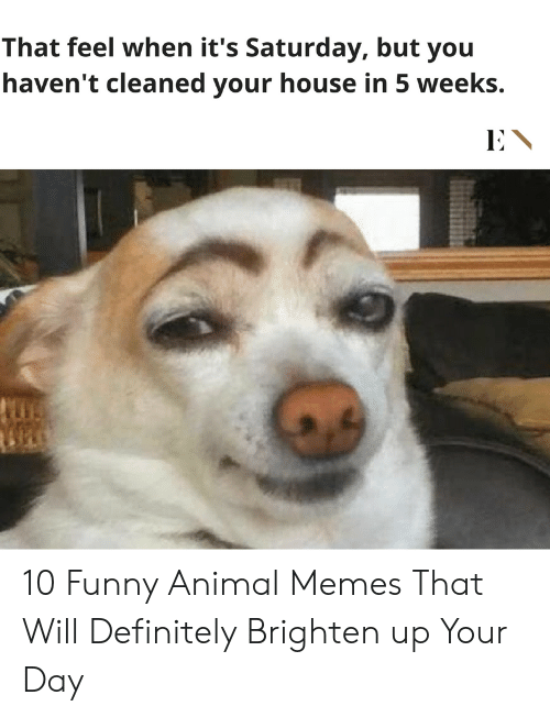 Definitely, Funny, and Memes: That feel when it's Saturday, but you  haven't cleaned your house in 5 weeks. 10 Funny Animal Memes That Will Definitely Brighten up Your Day