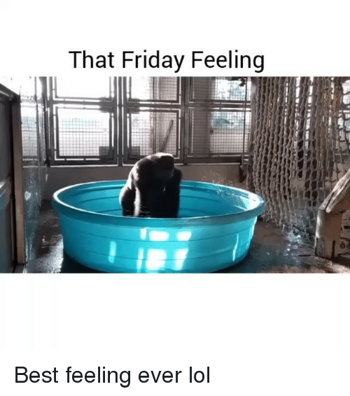 Friday, Funny, and Lol: That Friday Feeling Best feeling ever lol