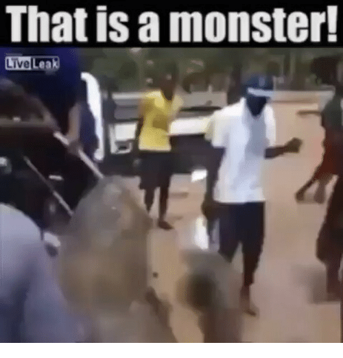 That Is a Monster! LiveLeak | Liveleak Meme on ME ME
