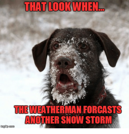 that look when the weatherman forcasts another snow storm inngi 7066039 that look when the weatherman forcasts another snow storm inngi
