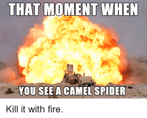 That Moment When You See A Camel Spider Fire Meme On Meme