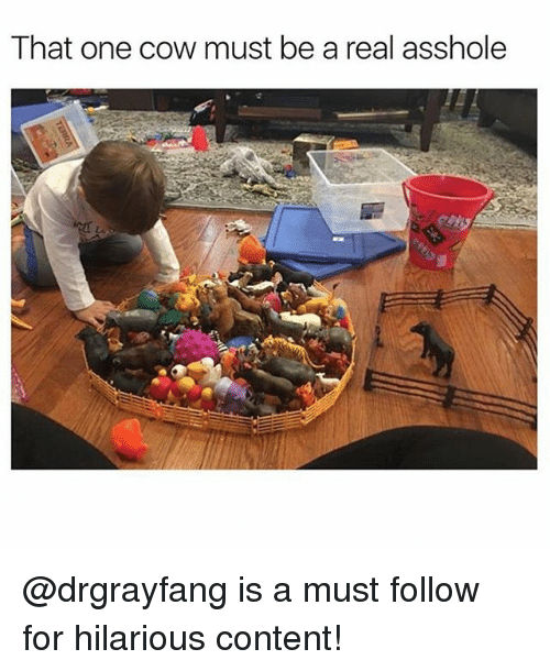 Funny, Meme, and Content: That one cow must be a real asshole @drgrayfang is a must follow for hilarious content!