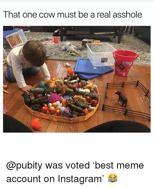 Funny, Instagram, and Meme: That one cow must be a real asshole @pubity was voted 'best meme account on Instagram' 😂