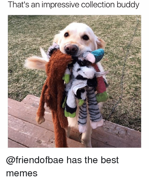 Funny, Memes, and Best: That's an impressive collection buddy @friendofbae has the best memes