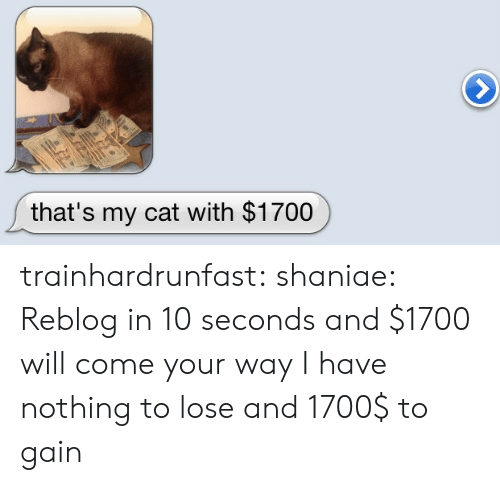 Tumblr, Blog, and Http: that's my cat with $1700 trainhardrunfast: shaniae:  Reblog in 10 seconds and $1700 will come your way  I have nothing to lose and 1700$ to gain