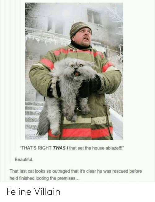 "Beautiful, House, and Villain: THATS RIGHT TWAS Ithat set the house ablaze!!!""  Beautiful  That last cat looks so outraged that it's clear he was rescued before  he'd finished looting the premises... Feline Villain"