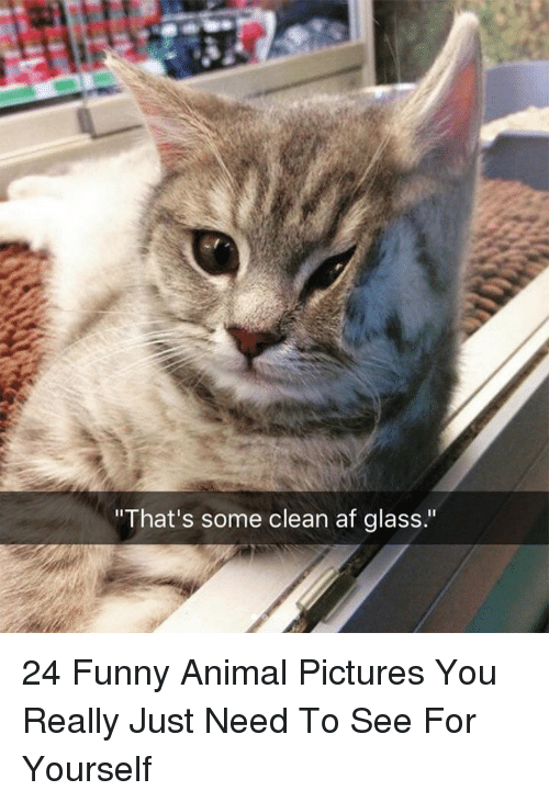 "Af, Funny, and Animal: That's some clean af glass."" 24 Funny Animal Pictures You Really Just Need To See For Yourself"
