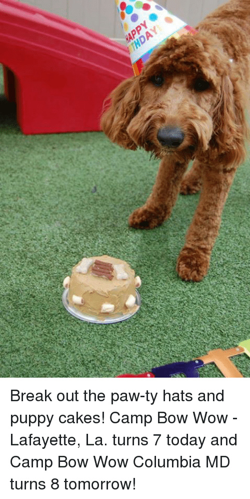 Thday Ya Break Out The Paw Ty Hats And Puppy Cakes Camp Bow Wow