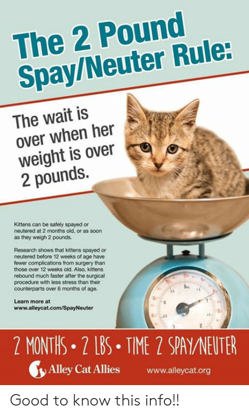 Memes, Soon..., and Good: The 2 Pound  Spay/Neuter Rule:  The wait is  over when her  weight is over  2 pounds.  Kittens can be safely spayed or  neutered at 2 months old, or as soon  as they weigh 2 pounds  Research shows that kittens spayed or  neutered before 12 weeks of age have  fewer complications from surgery than  those over 12 weeks old. Also, kittens  rebound much faster after the surgical  procedure with less stress than their  counterparts over 6 months of age.  5  Learn more at  www.alleycat.com/SpayNeuter  2 MONTHS.2 LBS TIME 2 SPA/NEUTER  y) Alley Cat Allies www.alleycat.org Good to know this info!!