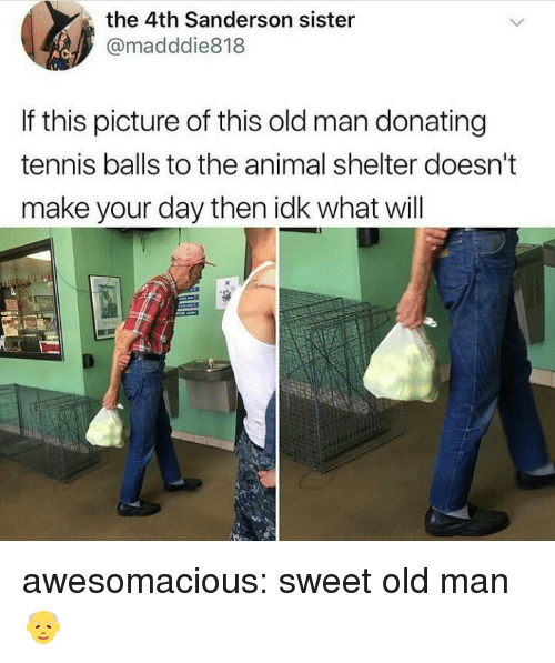 Old Man, Tumblr, and Animal: the 4th Sanderson sister  @madddie818  If this picture of this old man donating  tennis balls to the animal shelter doesn't  make your day then idk what will awesomacious:  sweet old man👴