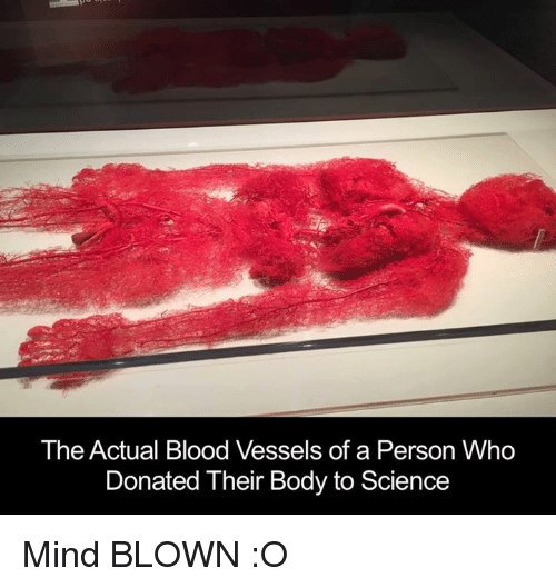 Memes, Science, and Mind: The Actual Blood Vessels of a Person Who  Donated Their Body to Science Mind BLOWN :O
