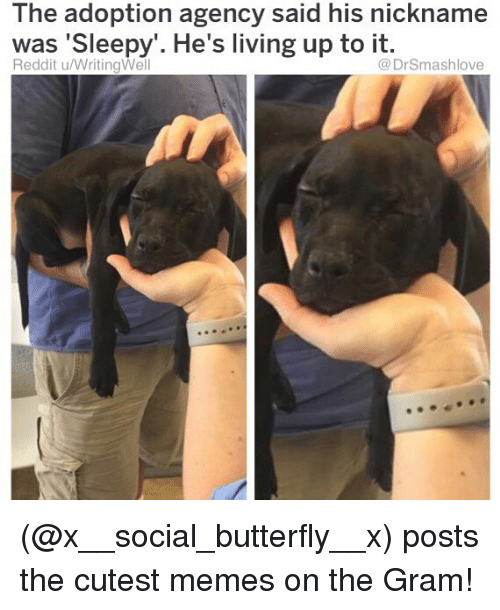 Memes, Reddit, and Butterfly: The adoption agency said his nickname  was 'Sleepy'. He's living up to it.  Reddit u/WritingWel  @DrSmashlove (@x__social_butterfly__x) posts the cutest memes on the Gram!