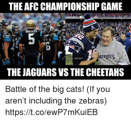 AFC Championship Game, Cats, and Football: THE AFC CHAMPIONSHIP GAME  BORTLES  6 o  @NFL MEMES  THE JAGUARS VS THE CHEETAHS Battle of the big cats! (If you aren't including the zebras) https://t.co/ewP7mKuiEB