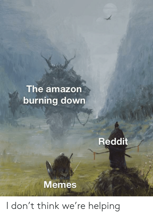 The Amazon Burning Down Reddit Memes I Don't Think We're