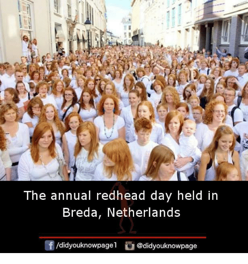 Memes, Netherlands, and 🤖: The annual redhead day held in  Breda, Netherlands  /didyouknowpagel  @didyouknowpage
