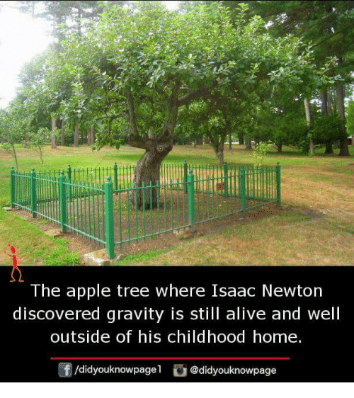 The Apple Tree Where Isaac Newton Discovered Gravity Is Still Alive