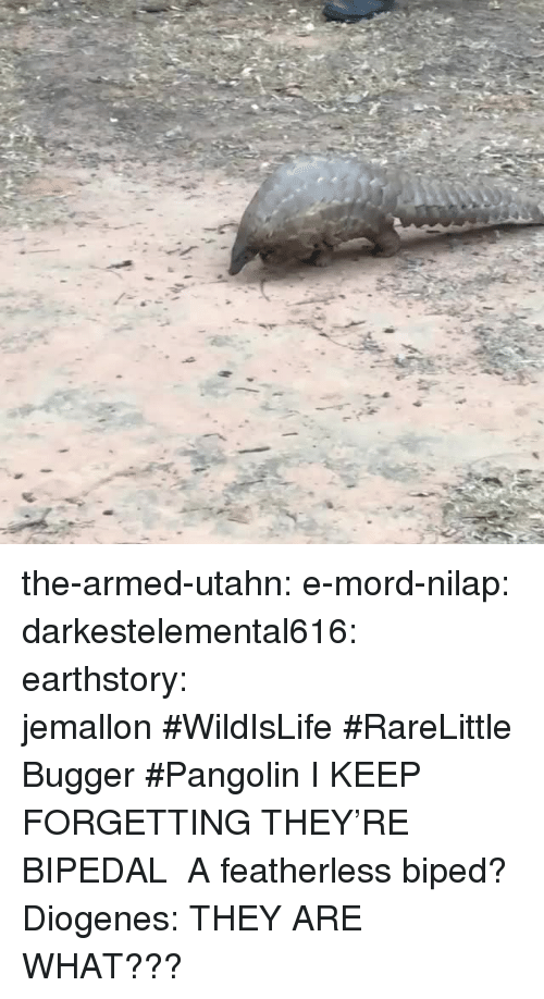 Gif, Instagram, and Tumblr: the-armed-utahn:  e-mord-nilap:  darkestelemental616:  earthstory:  jemallon#WildIsLife#RareLittleBugger#Pangolin  I KEEP FORGETTING THEY'RE BIPEDAL  A featherless biped? Diogenes:   THEY ARE WHAT???