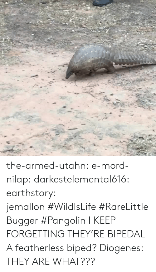 Instagram, Tumblr, and Blog: the-armed-utahn: e-mord-nilap:  darkestelemental616:  earthstory:  jemallon #WildIsLife #RareLittleBugger #Pangolin  I KEEP FORGETTING THEY'RE BIPEDAL   A featherless biped? Diogenes:   THEY ARE WHAT???