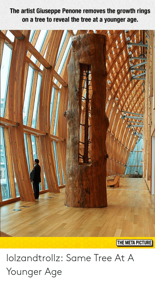 Tumblr, Blog, and Tree: The artist Giuseppe Penone removes the growth rings  on a tree to reveal the tree at a younger age.  THE META PICTURE lolzandtrollz:  Same Tree At A Younger Age
