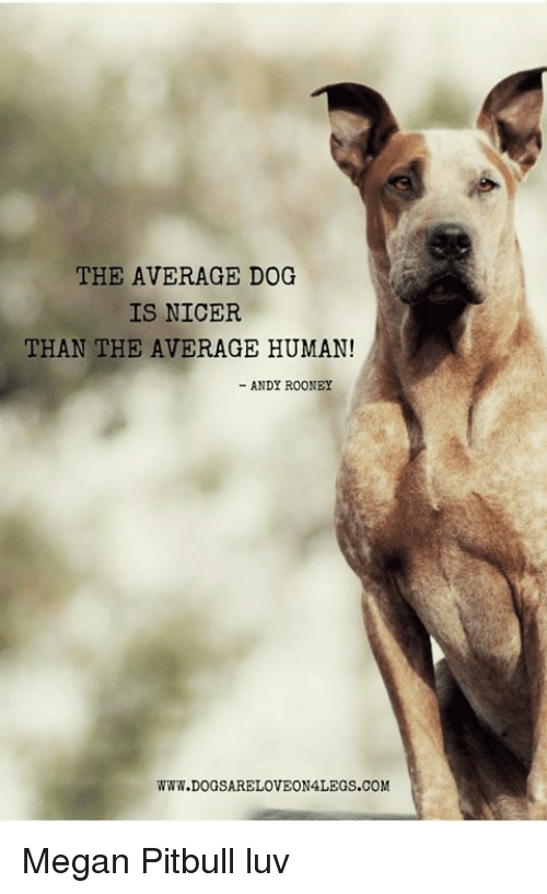 The AVERAGE DOG IS NICER THAN THE AVERAGE HUMAN! ANDY ROONEY