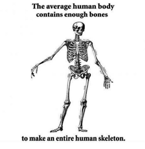 The Average Human Body Contains Enough Bones to Make an Entire Human ...