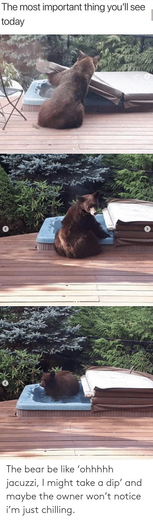 Be Like, Bear, and Jacuzzi: The bear be like 'ohhhhh jacuzzi, I might take a dip' and maybe the owner won't notice i'm just chilling.