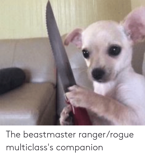 The Beastmaster Rangerrogue Multiclass's Companion | Rogue Meme on ME ME
