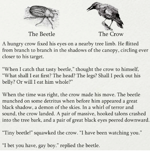 """Head, Hungry, and I Bet: The Beetle  The Crow  A hungry crow fixed his eyes on a nearby tree limb. He flitted  from branch to branch in the shadows of the canopy, circling ever  closer to his target.  When I catch that tasty beetle,"""" thought the crow to himself,  """"What shall I eat first? The head? The legs? Shall I peck out his  belly? Or will I eat him whole?""""  When the time was right, the crow made his move. The beetle  munched on some detritus when before him appeared a great  black shadow, a demon of the skies. In a whirl of terror and  sound, the crow landed. A pair of massive, hooked talons crashed  into the tree bark, and a pair of great black eyes peered downward  0)  """"Tiny beetle!"""" squawked the crow. """"I have been watching you.""""  """"I bet you have, gay boy."""" replied the beetle."""