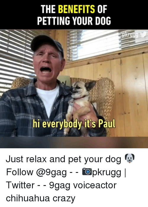 9gag, Chihuahua, and Crazy: THE BENEFITS OF  PETTING YOUR DOG  hi everybody it's Paul Just relax and pet your dog 🐶 Follow @9gag - - 📷pkrugg   Twitter - - 9gag voiceactor chihuahua crazy