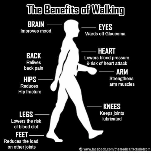 Bloods, Brains, and Memes: The Benefits of Walking  BRAIN  EYES  improves mood  Wards off Glaucoma  HEART  BACK  Lowers blood pressure  Relives  risk of heart attack  back pain  ARM  Strengthens  HIPS  arm muscles  Reduces  Hip fracture  KNEES  Keeps joints  LEGS  lubricated  Lowers the risk  of blood clot  FEET  Reduces the load  on other joints  www.facebook.com/themedicalfactsdotcom