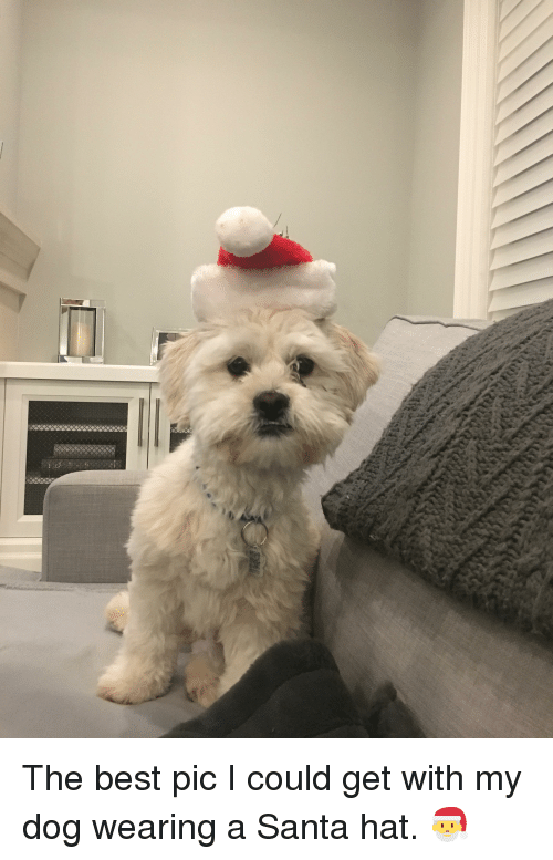 Best, Santa, and Dog