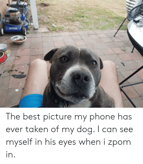Phone, Taken, and Best: The best picture my phone has ever taken of my dog. I can see myself in his eyes when i zpom in.