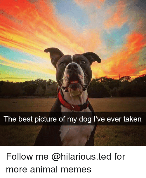 Funny, Memes, and Taken: The best picture of my dog l've ever taken Follow me @hilarious.ted for more animal memes