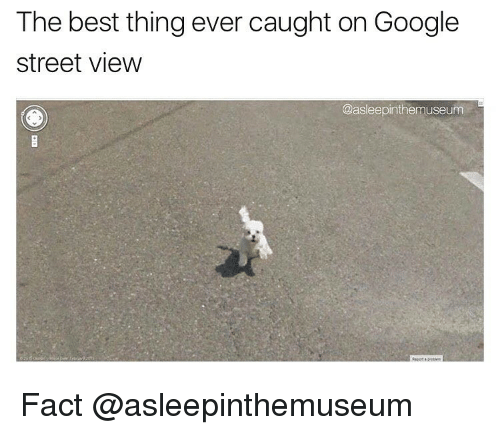 Funny, Google, and Best: The best thing ever caught on Google  Street View  @asleepinthemuseum Fact @asleepinthemuseum