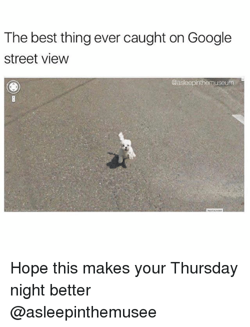 Funny, Google, and Meme: The best thing ever caught on Google  street view  @asleepinthemuseunm Hope this makes your Thursday night better @asleepinthemusee