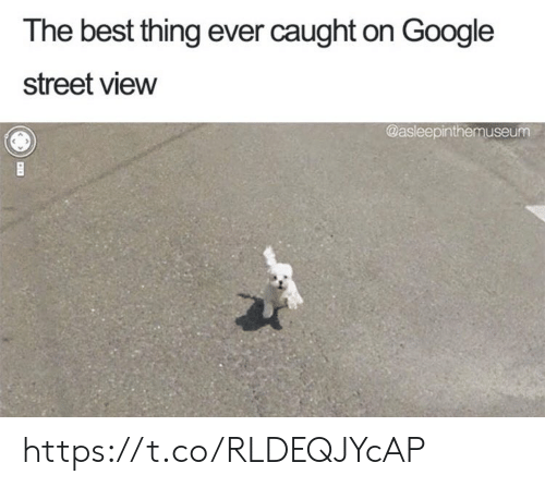Google, Memes, and Best: The best thing ever caught on Google  street view  @asleepinthemuseurm https://t.co/RLDEQJYcAP