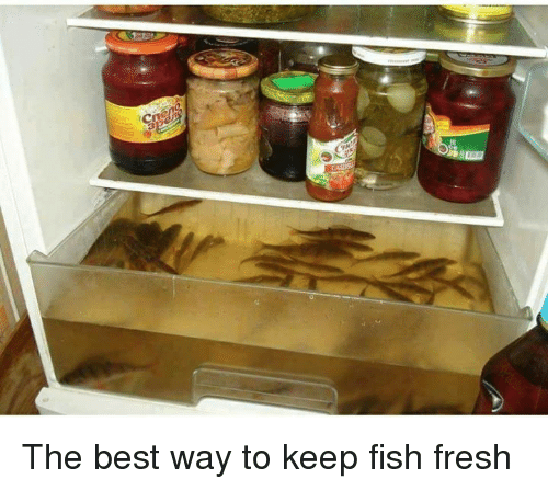 Fresh, Memes, and Best: The best way to keep fish fresh