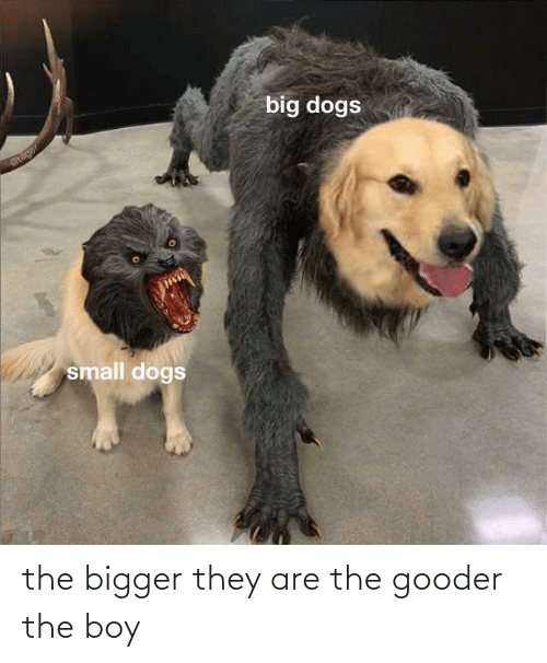 Boy, They, and The: the bigger they are the gooder the boy