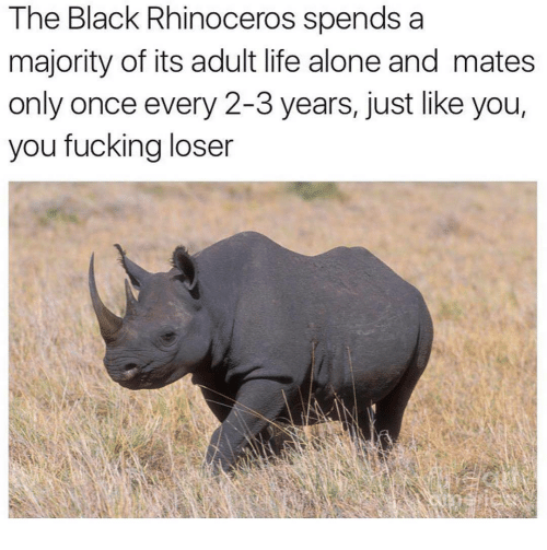 Being Alone, Fucking, and Life: The Black Rhinoceros spends a  majority of its adult life alone and mates  only once every 2-3 years, just like you,  you fucking loser