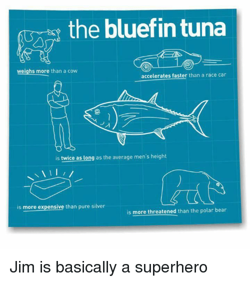 Superhero, The Office, And Bear: The Bluefin Tuna Weighs More Than A Cow