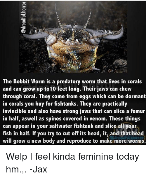25 best memes about bobbit worm bobbit worm memes for Where can i buy worms for fishing near me