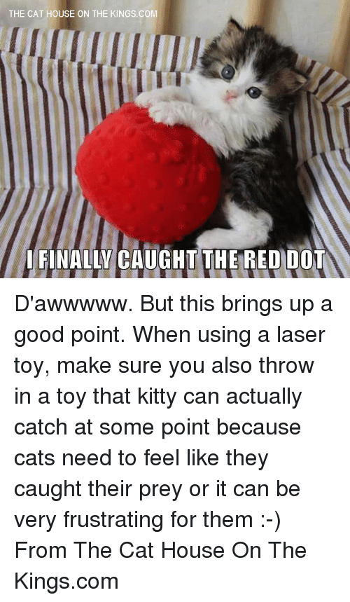 Cats, Finals, and Kitties: THE CAT HOUSE ON THE KINGS.COM  I FINALLY CAUGHT THE RED DOT D'awwwww. But this brings up a good point. When using a laser toy, make sure you also throw in a toy that kitty can actually catch at some point   because cats need to feel like they caught their prey or it can be very frustrating for them :-) From The Cat House On The Kings.com